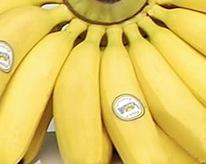 BananaDivision.jpg